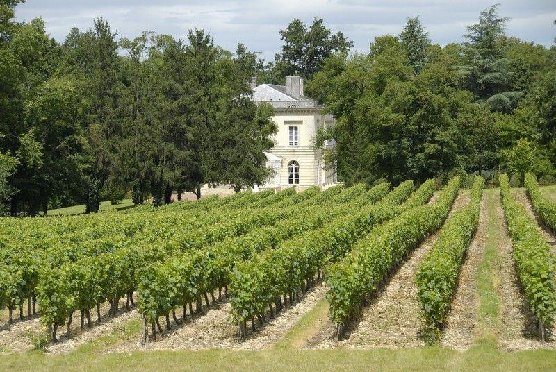 chteau vigne